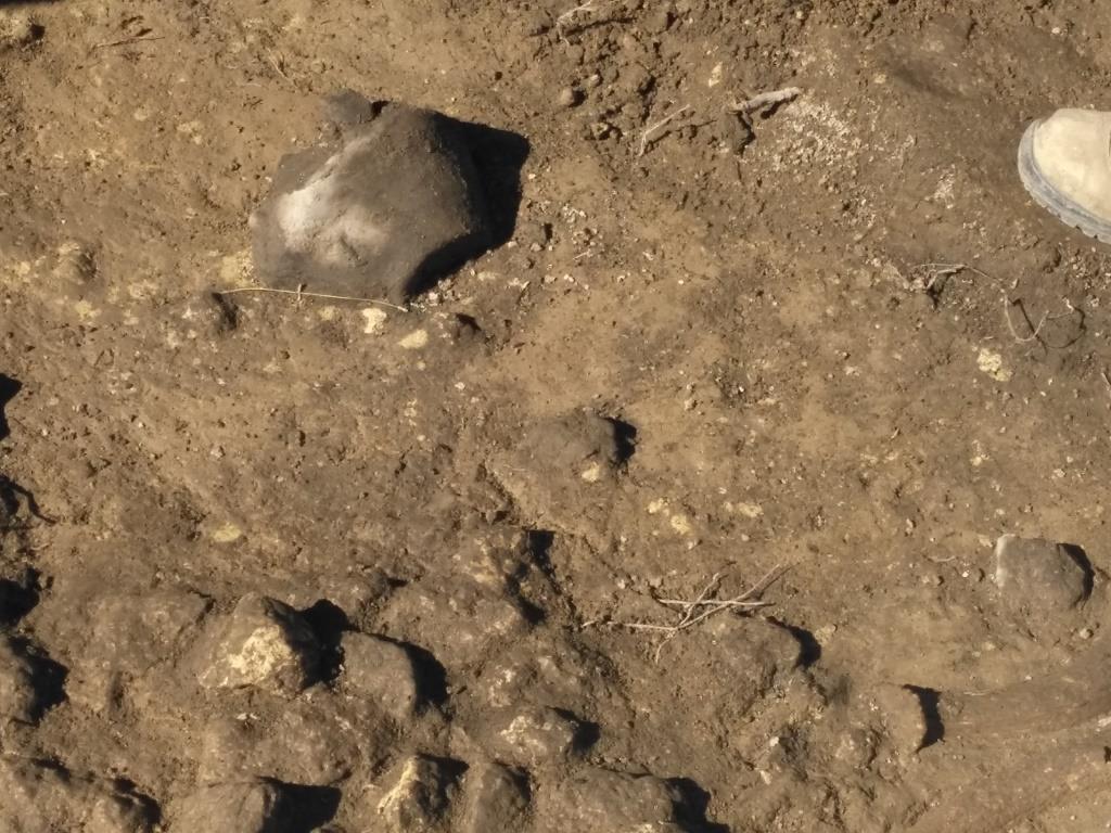 Ipogei di Trinitapoli, Archeologi al lavoro