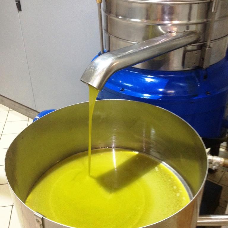 abbraccia il tuo olio raccolta olive degustazione trinitapoli